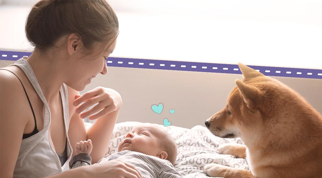 Cómo preparar a tu mascota para la llegada de un bebé